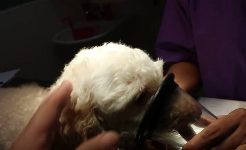 pies podczas narkozy